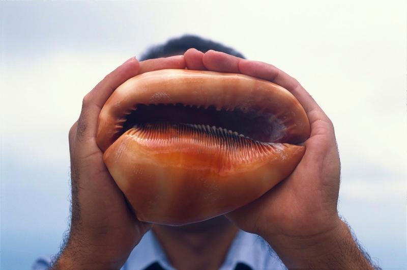 echo, rÇunion, 2005