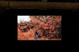 Kapwani-Kiwanga-Vumbi-2012-Courtesy-de-l'artiste-et-galerie-Jérôme-Poggi-Ferme-du-Buisson-©-Emile-Ouroumov-800x532