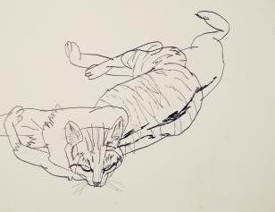 cat-47