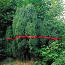 Sans titre baie de genièvre 1999 100 x 100 Courtesy Galerie Claire Gastaud